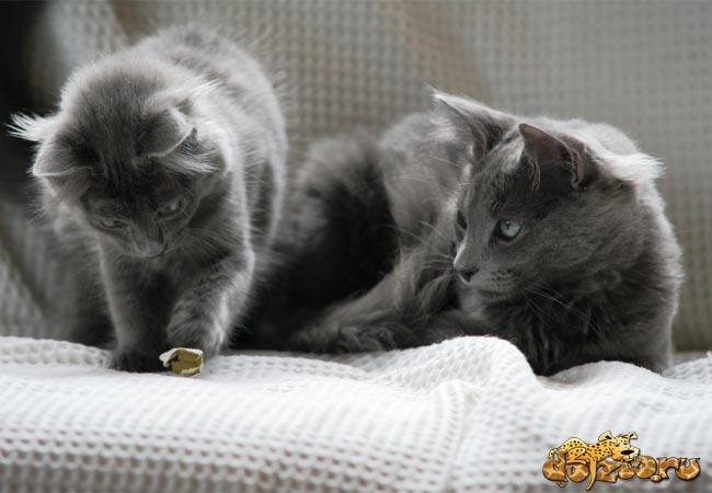 Котенок и мама