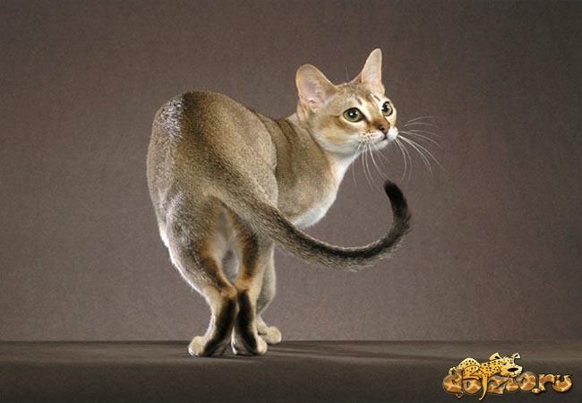 Маленькая и аккуратная кошка
