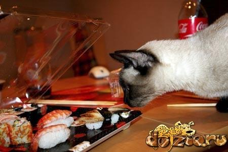 Тайская кошка кушает суши и роллы