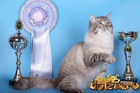 Кошка призер
